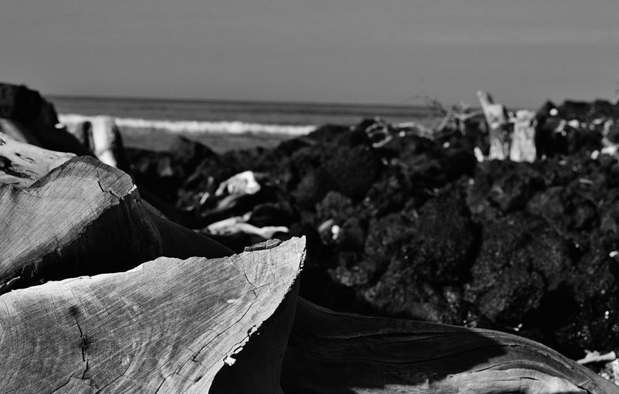 Driftwood Photograph - Bleached  by Tara Miller