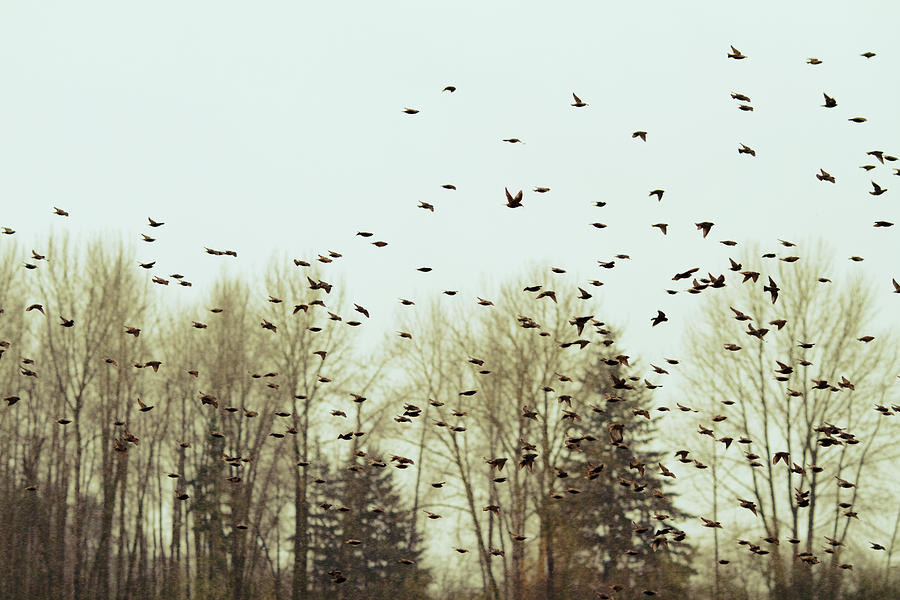 Birds Photograph - Bleak Mid-winter by Rebecca Cozart