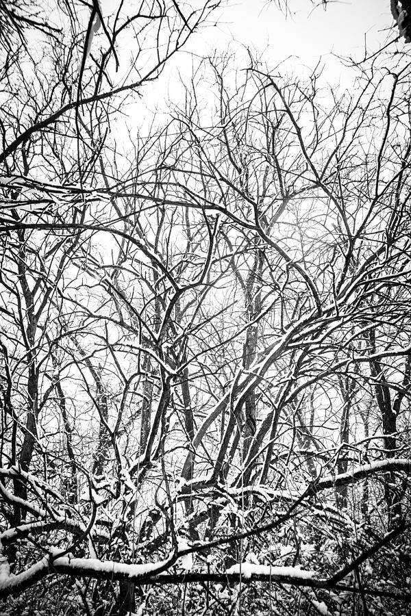 Tree Photograph - Bleak Winter Trees 3 by Zach Murphy
