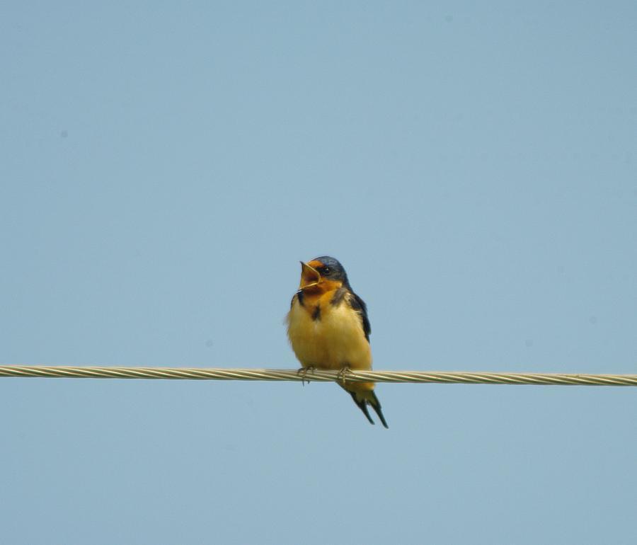 Birds Photograph - Bleat by Jeff Swan