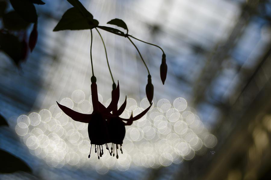 Flower Mixed Media - Bleeding Heart Bokeh by Trish Tritz