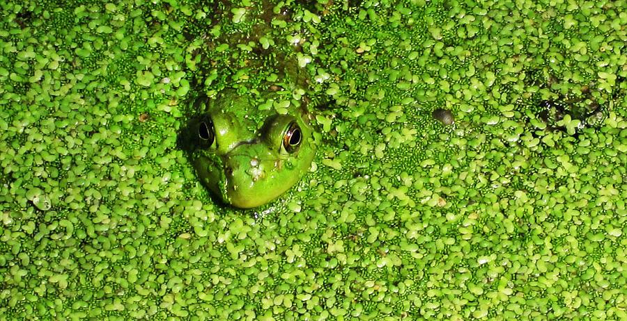 Frog Photograph - Blending by Jeff Klingler