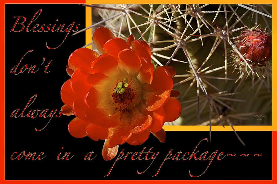 Flower Photograph - Blessings by Phyllis Denton