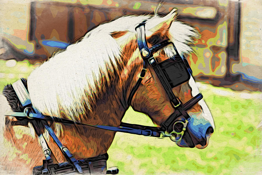 Horse Photograph - Blinders by Alice Gipson