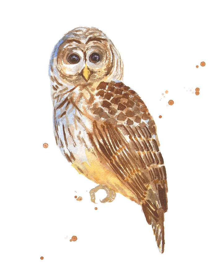 Owl Painting - Blink by Alison Fennell