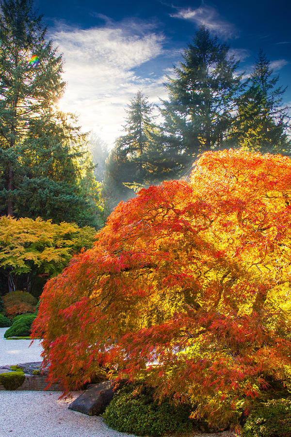 Oregon Fall Colors Photograph - Bliss by Kunal Mehra