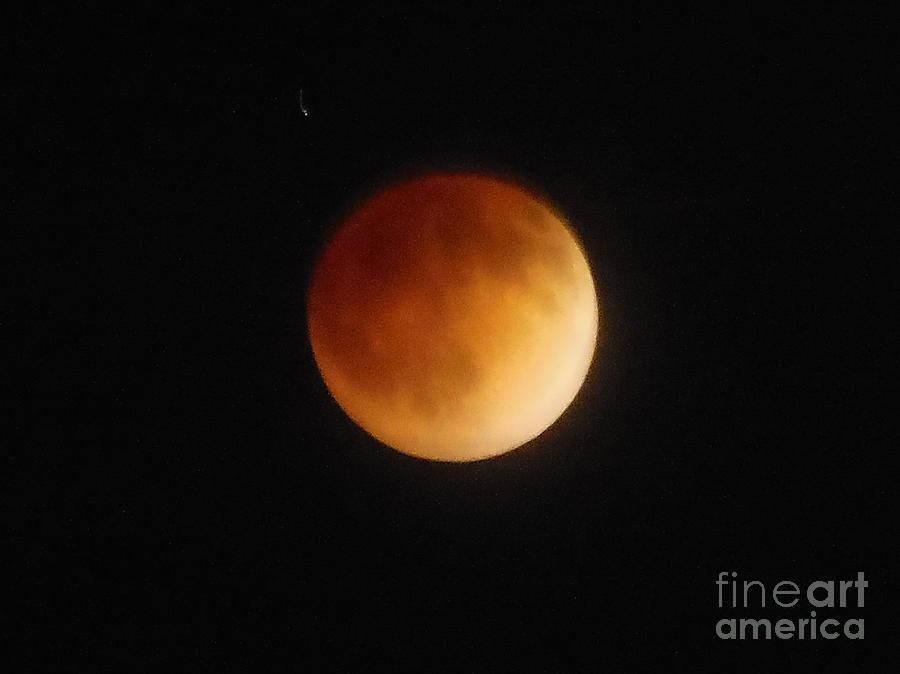 Blood Moon Photograph - Blood Moon by Eclectic Captures