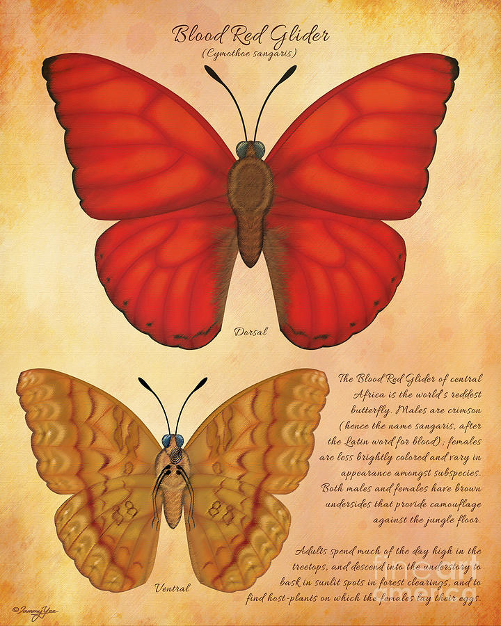 Africa Painting - Blood Red Glider Butterfly by Tammy Yee