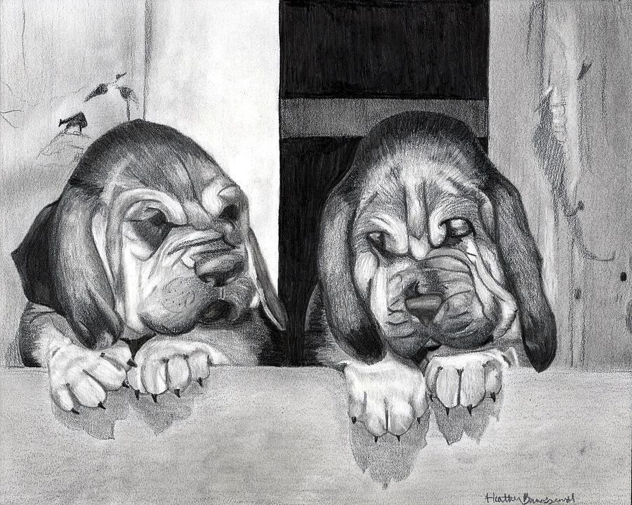 Bloodhound Puppies Dog Portrait  Drawing by Olde Time  Mercantile