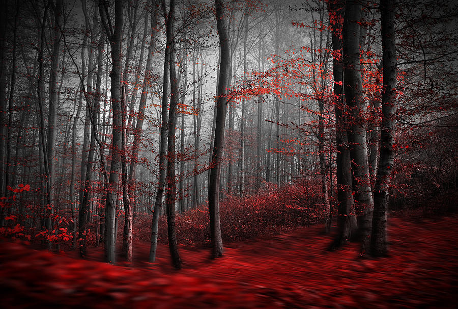 Landscape Photograph - Bloody River by Samanta