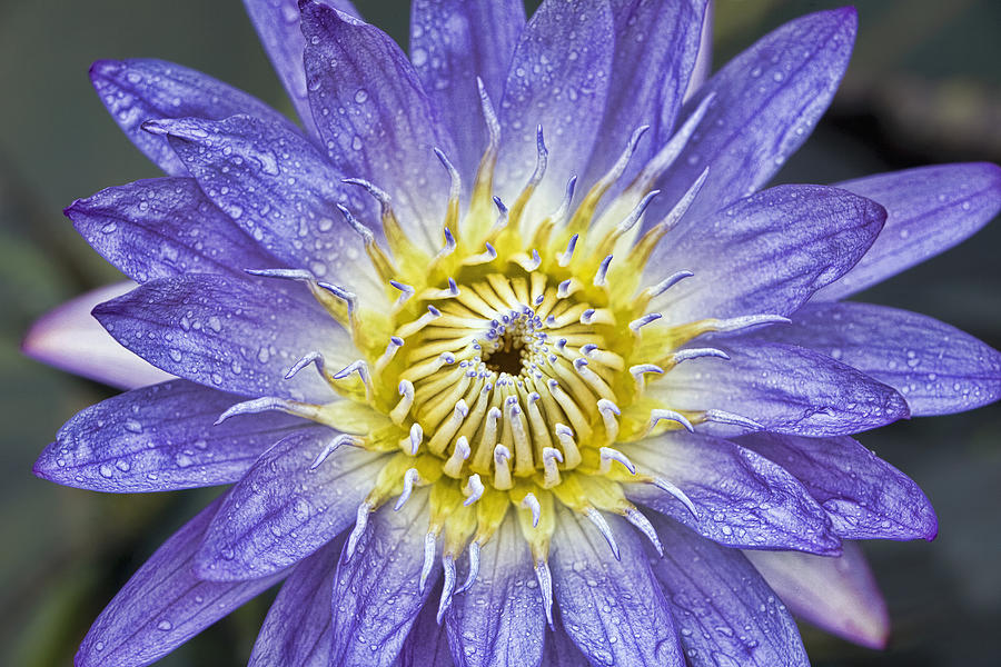 Flower Photograph - Bloom by Karen Walzer