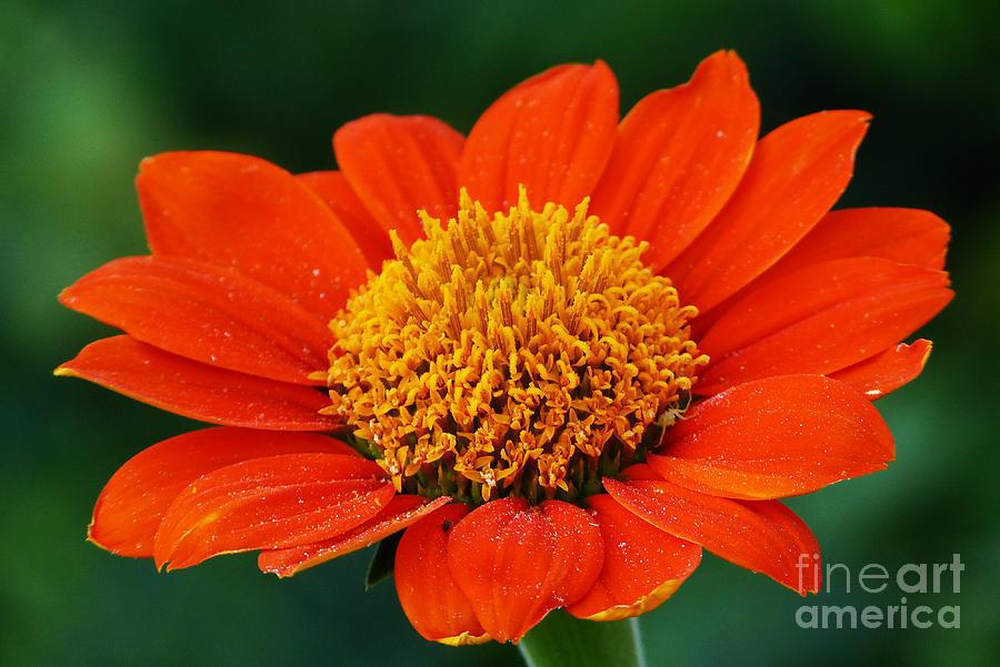 Blooming Flower by Marguerita Tan