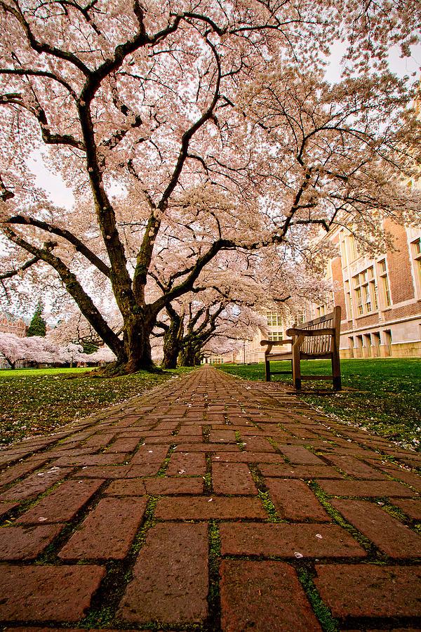 University Of Washington Photograph - Blooming Giants by Dan Mihai