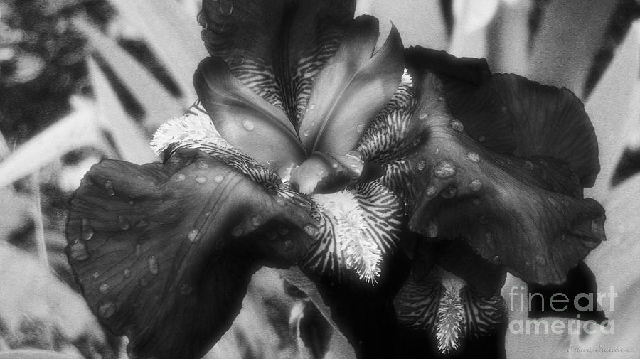 Nature Photograph - Blooming In Black And White by Mkaz Photography