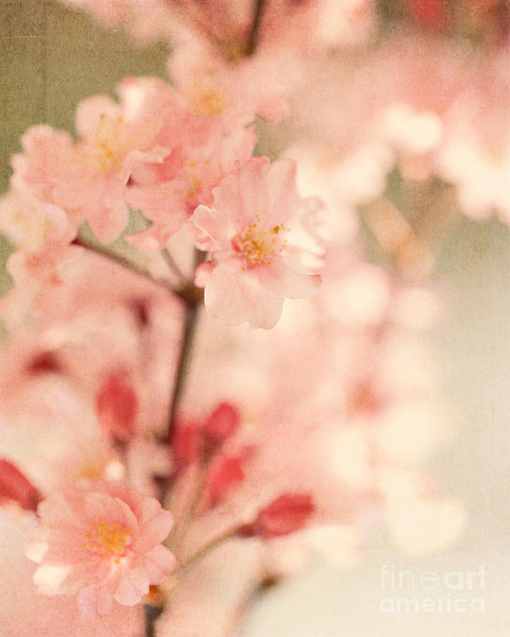 Cherry Blossoms Photograph - Blooming Season by Kim Fearheiley