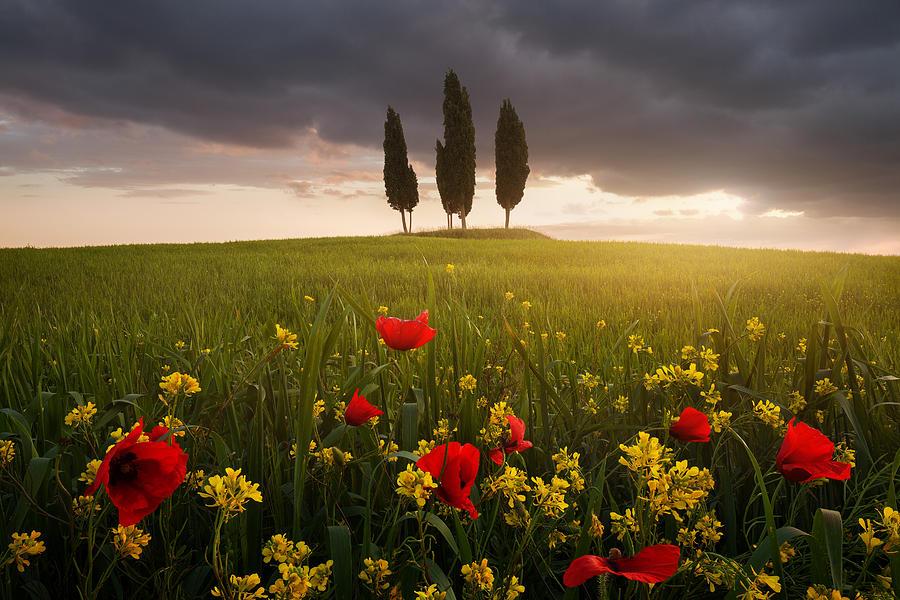 Italy Photograph - Blooming Tuscany by Daniel ?e?icha