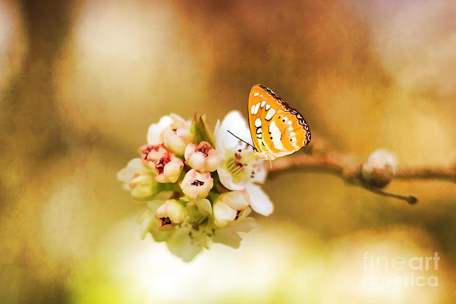 Arrangement Photograph - Blooms And Butterflies by Darren Fisher