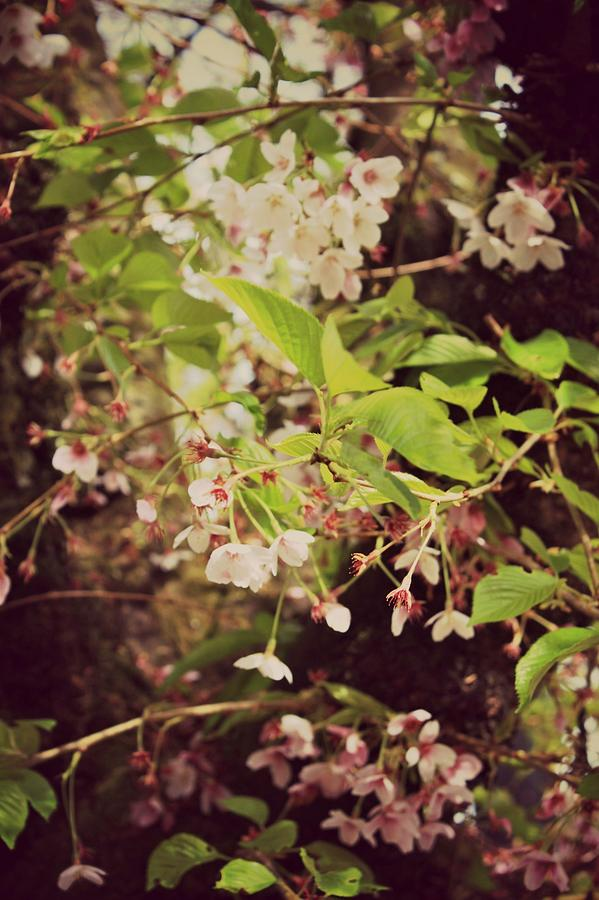 Wildflowers Photograph - Blooms In The Branches by Cathie Tyler