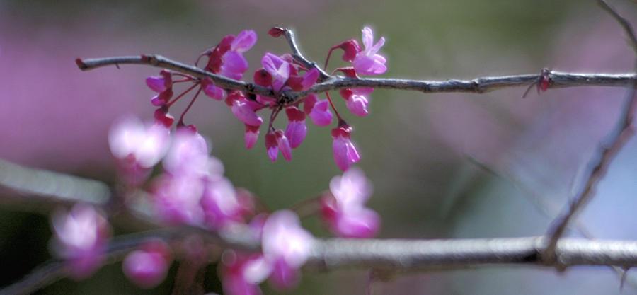 Blossom 25895 2 Photograph