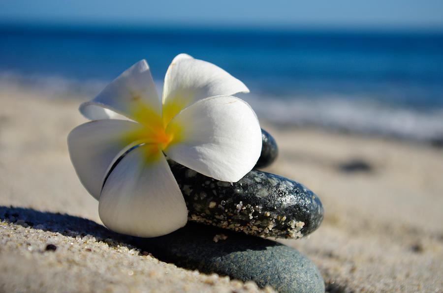 Blossom Photograph - Blossom by Camilla Fuchs