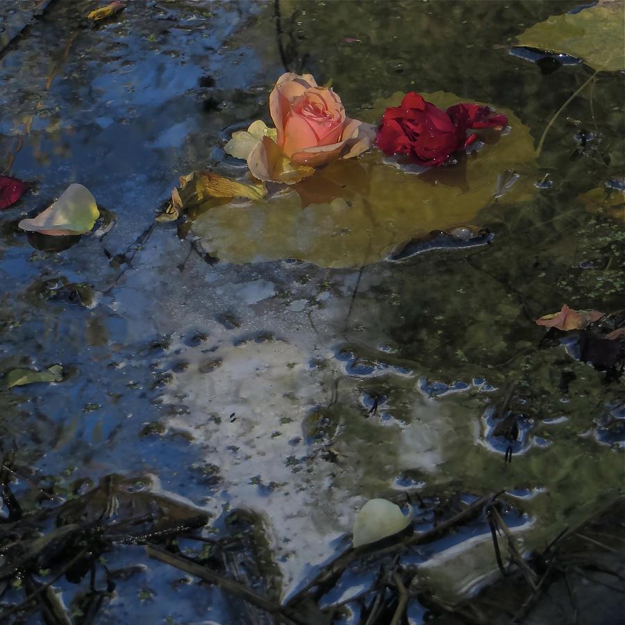 Blossom Rain 13 Photograph by Georg Kickinger
