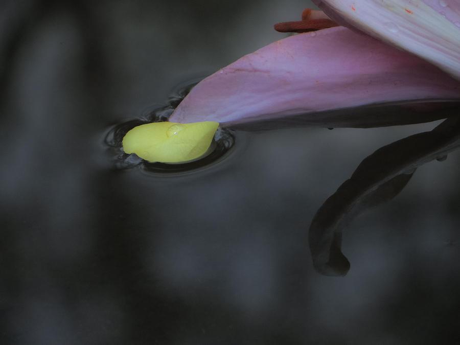 Blossom Rain 31 Photograph by Georg Kickinger