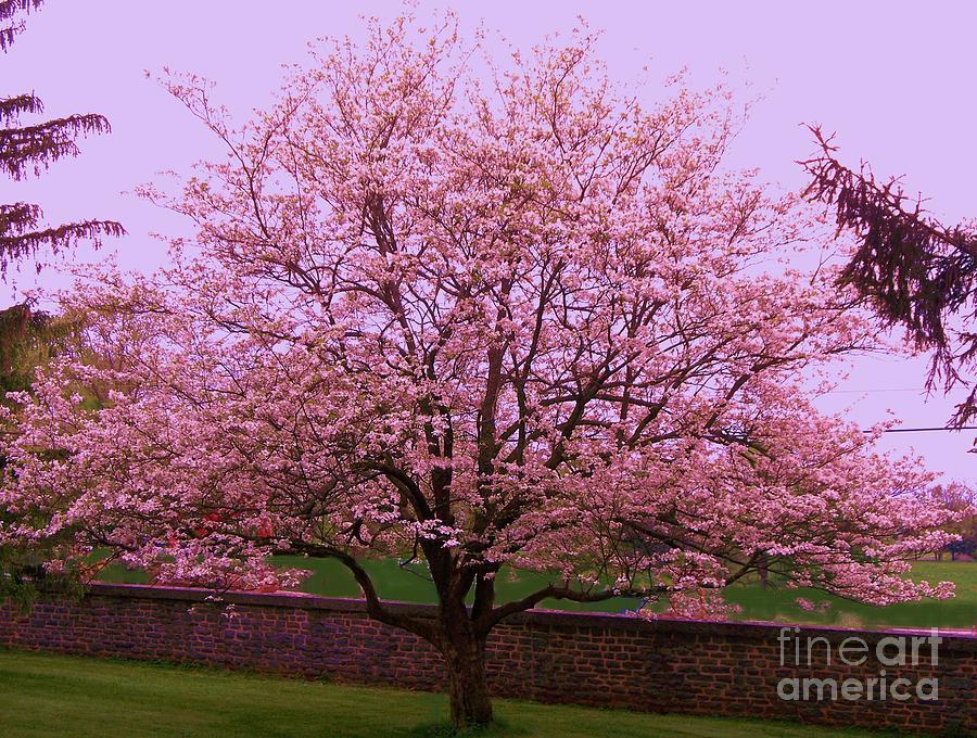 Blossoming almond tree painting by eric schiabor for Sfondilandia primavera