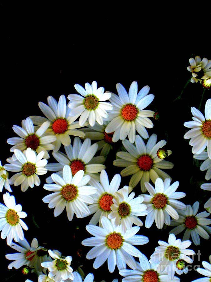 Blossoming darkness by Pauli Hyvonen