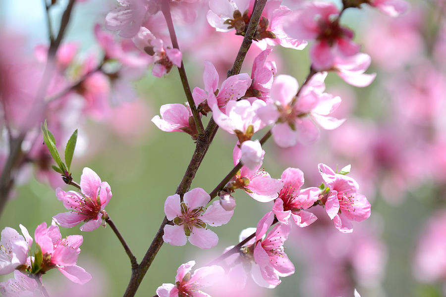 Flower Photograph - Blossoming Hillside by Melanie Moraga