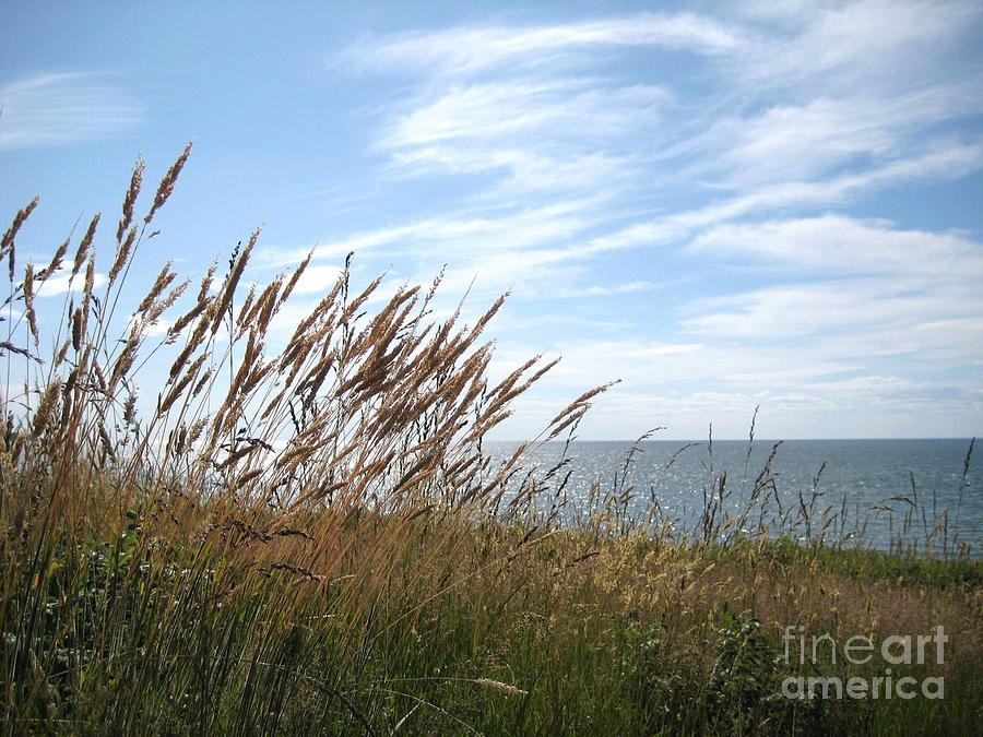Blowing in the Wind by Deborah A Andreas