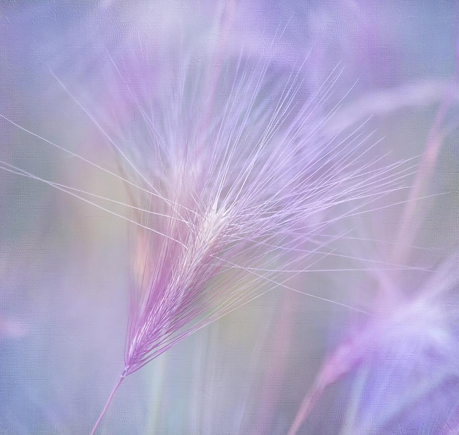 Charm Photograph - Blowing In The Wind by Kim Hojnacki
