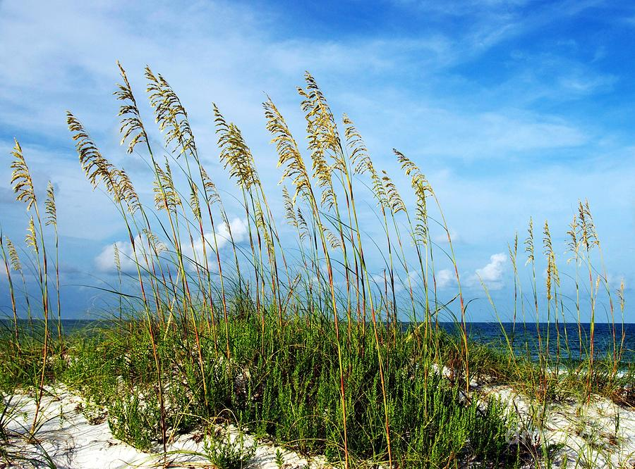 Seashore Photograph - Blowing In The Wind by Mel Steinhauer