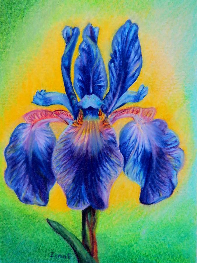 Iris Drawing - Blue ... by Zina Stromberg