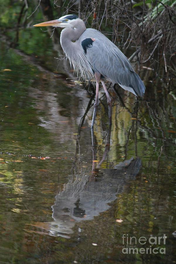 Blue Heron Photograph - Blue 1212 by Deborah Benoit