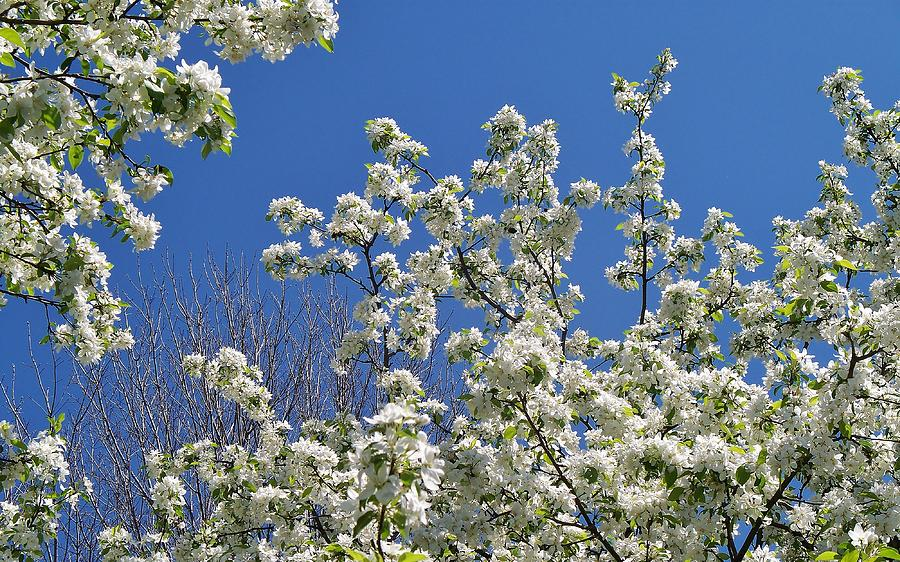 Flowers Photograph - Blue And White by Steven Stutz