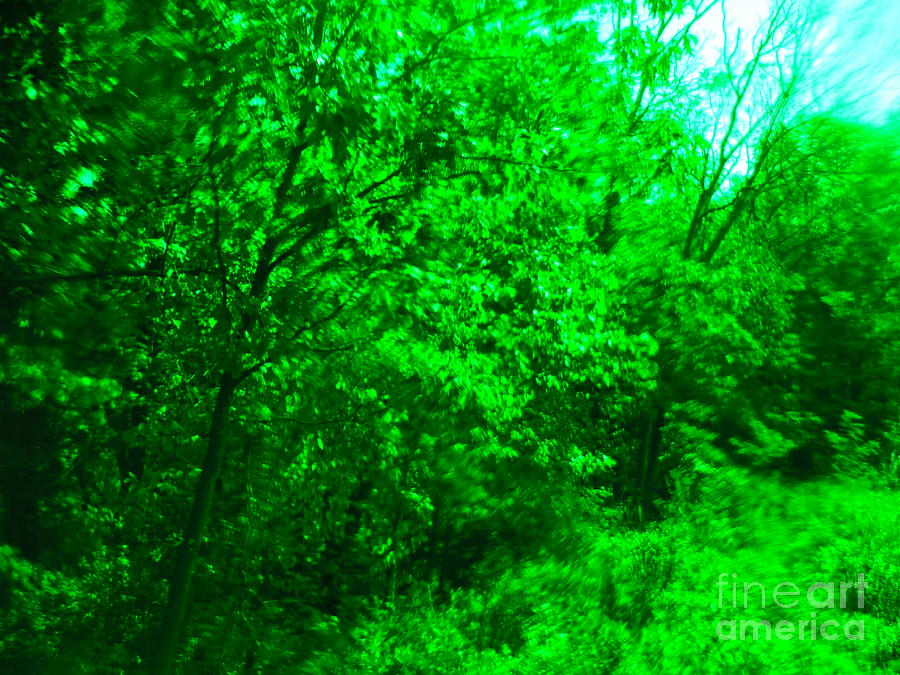 Green Forest Photograph - Blue Background Branches by Paddy Shaffer