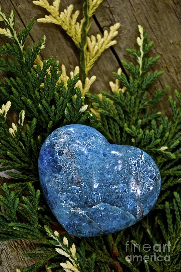 Heart Photograph - Blue Beauty by Lisa  Telquist