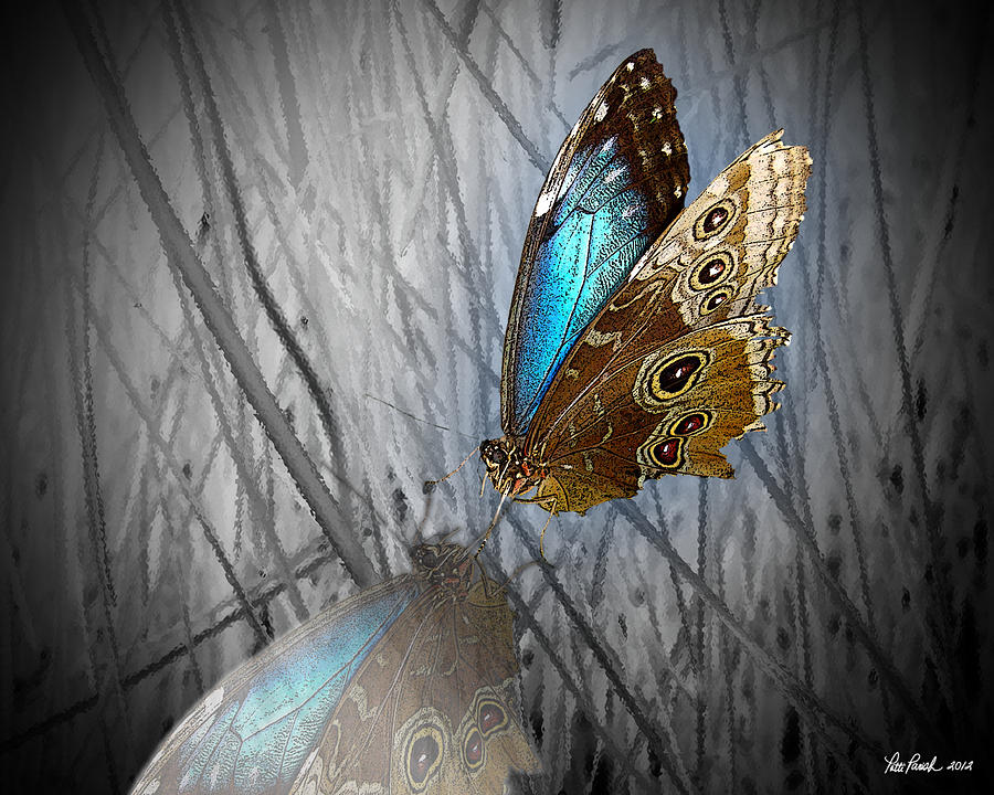 Blue Beauty Digital Art by Patti Parish
