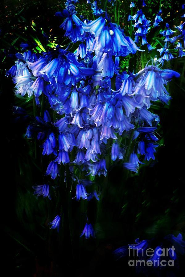 Blue Bells Photograph by Scott Allison