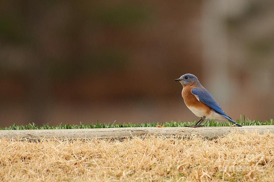 Blue Bird by Miguel Celis