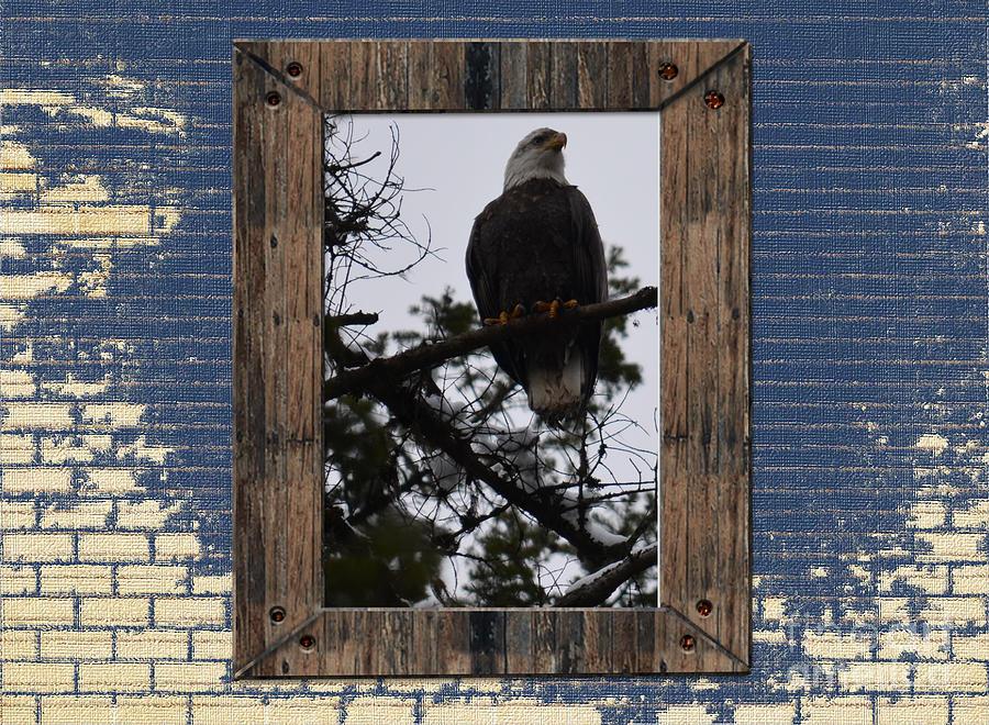 Bald Eagle Photograph - Blue Brick by Greg Patzer