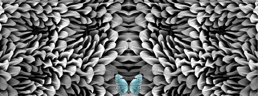 Blue Butterfly And Antenna Photograph by Sheri Neva