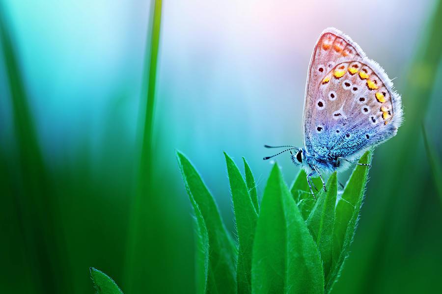 Blue Butterfly Photograph by Avalon studio