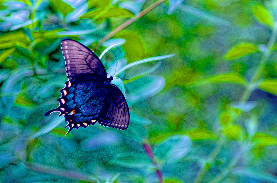Butterfly Photograph - Blue Butterfly Fantasy by Linda Mcfarland