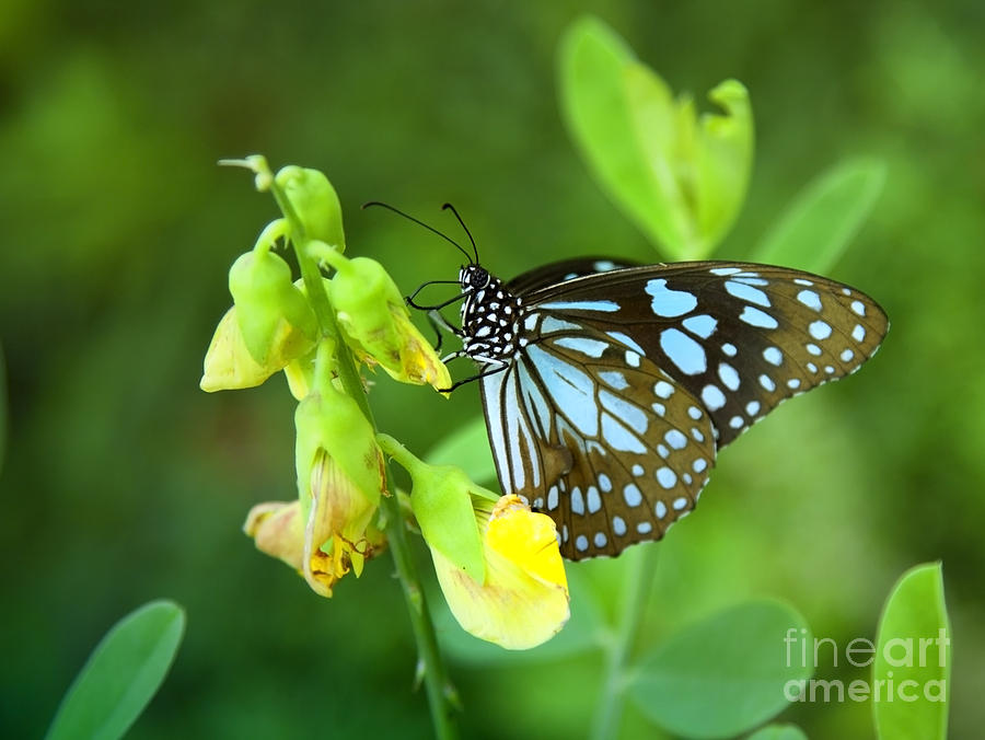 Butterfly Photograph - Blue Butterfly In The Green Garden by Gina Koch