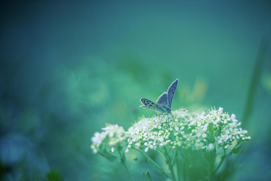 Blue Butterfly Photograph by Levente Bodo