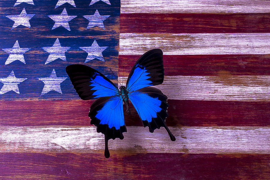 American Photograph - Blue Butterfly On American Flag by Garry Gay