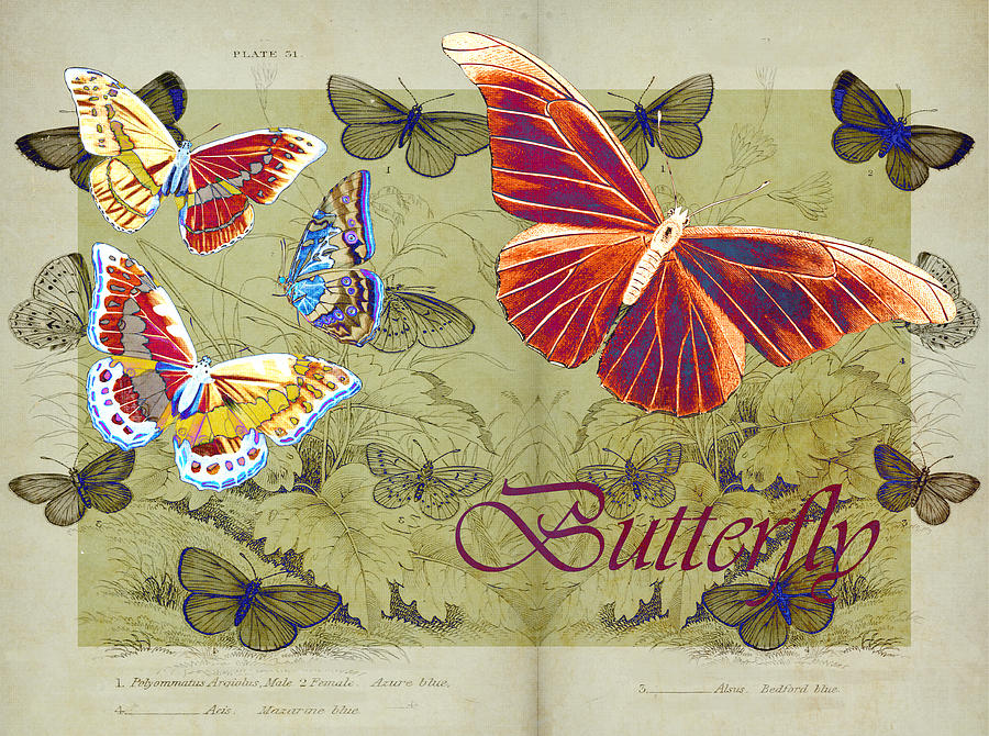 Butterflies Digital Art - Blue Butterfly - Orange On Green - S02a by Variance Collections