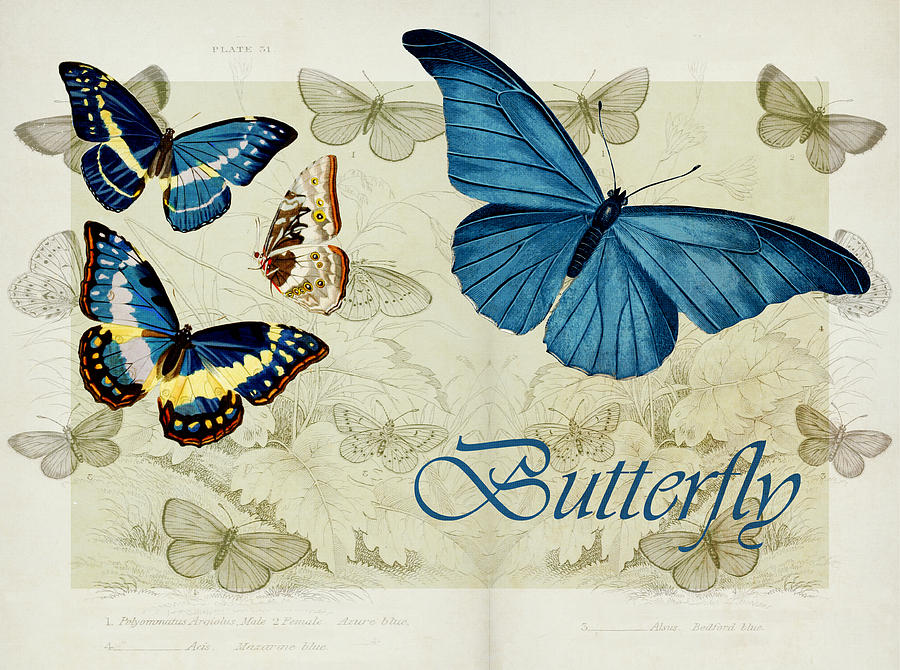 Butterfly Digital Art - Blue Butterfly - S01a by Variance Collections