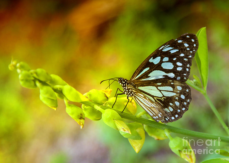 Butterfly Photograph - Blue Butterfly With Beautiful Colors by Gina Koch